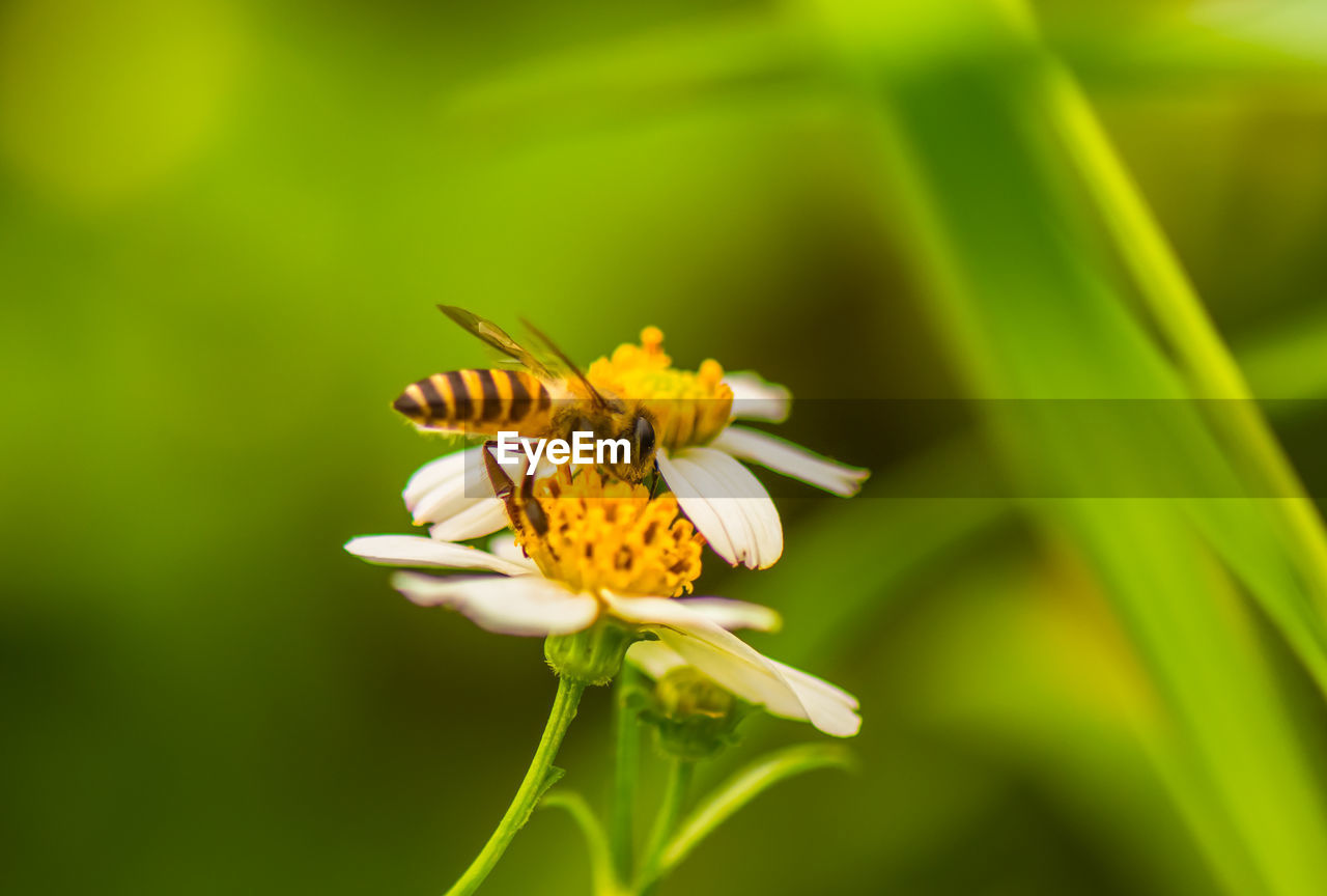 flowering plant, flower, fragility, beauty in nature, vulnerability, plant, growth, insect, flower head, petal, invertebrate, animals in the wild, one animal, close-up, freshness, animal wildlife, animal themes, animal, inflorescence, no people, pollen, pollination, outdoors
