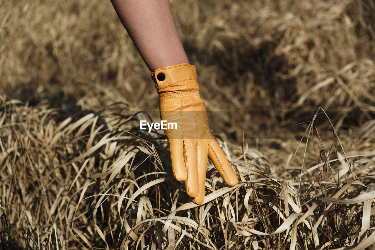 Cropped hand of woman wearing glove touching plants