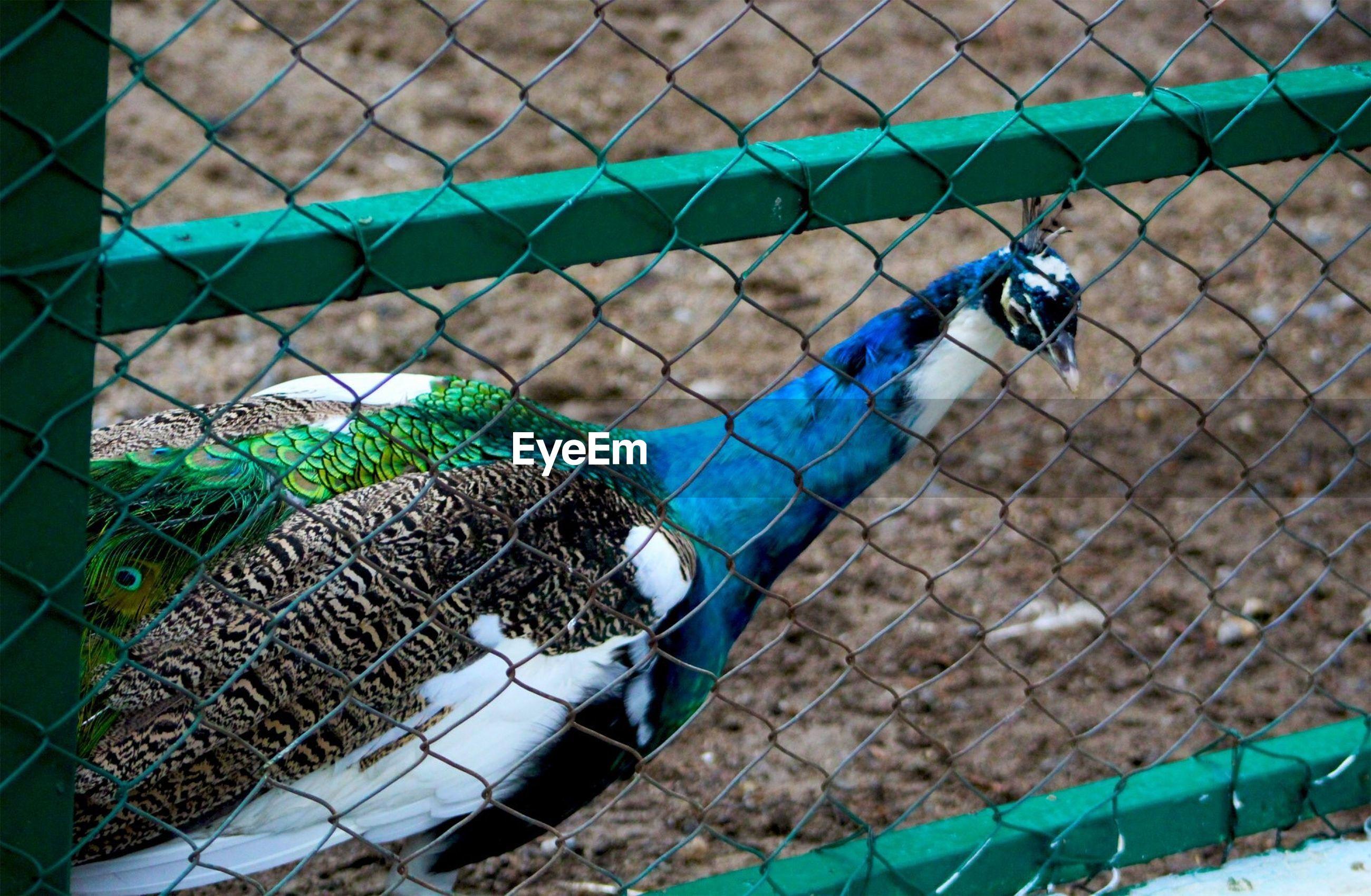 CLOSE-UP OF A BIRD FENCE