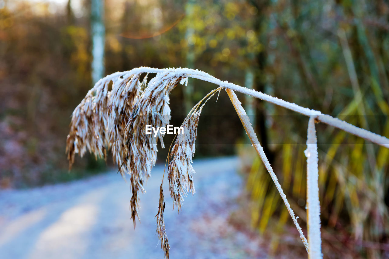 focus on foreground, plant, close-up, no people, nature, day, cold temperature, winter, selective focus, dry, field, beauty in nature, land, growth, frozen, ice, tranquility, outdoors, protection, security