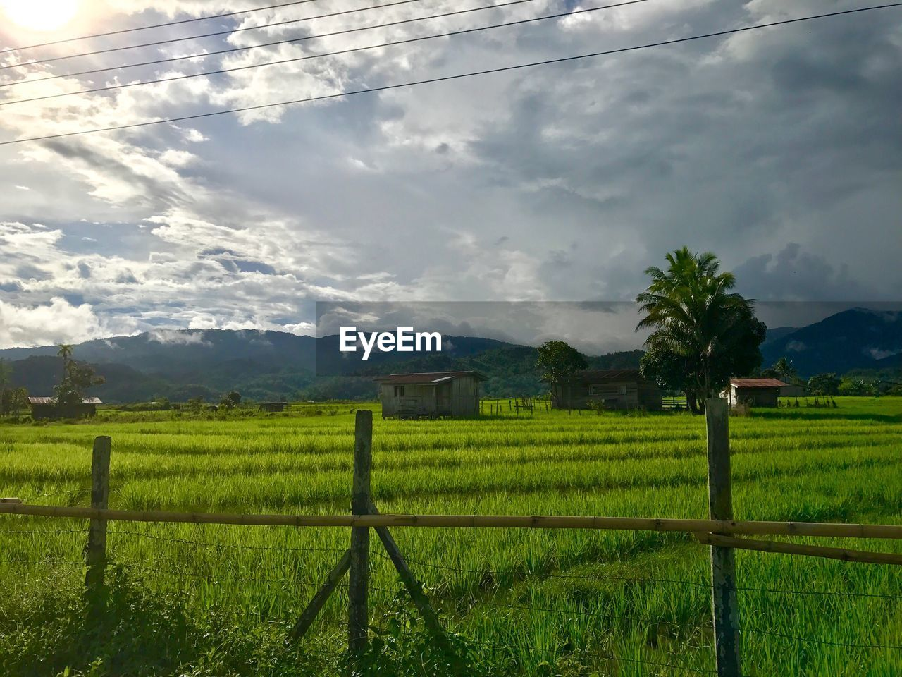 field, agriculture, landscape, no people, tranquility, nature, sky, growth, scenics, tranquil scene, mountain, grass, day, rural scene, beauty in nature, outdoors, tree