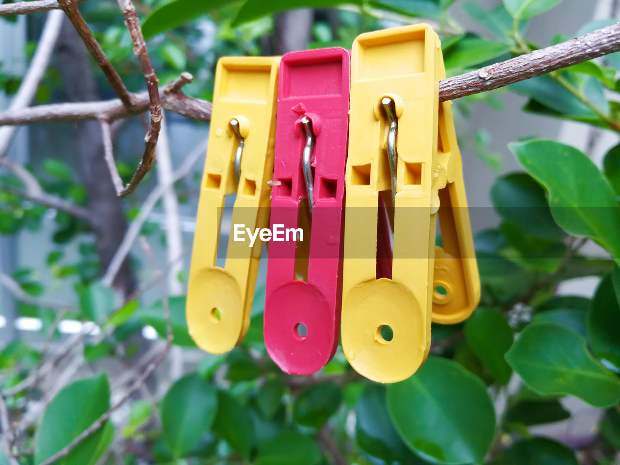 hanging, clothespin, yellow, multi colored, nature, no people, plant, close-up, focus on foreground, day, outdoors, leaf, clothesline, pink color, tree, plant part, plastic, branch, growth