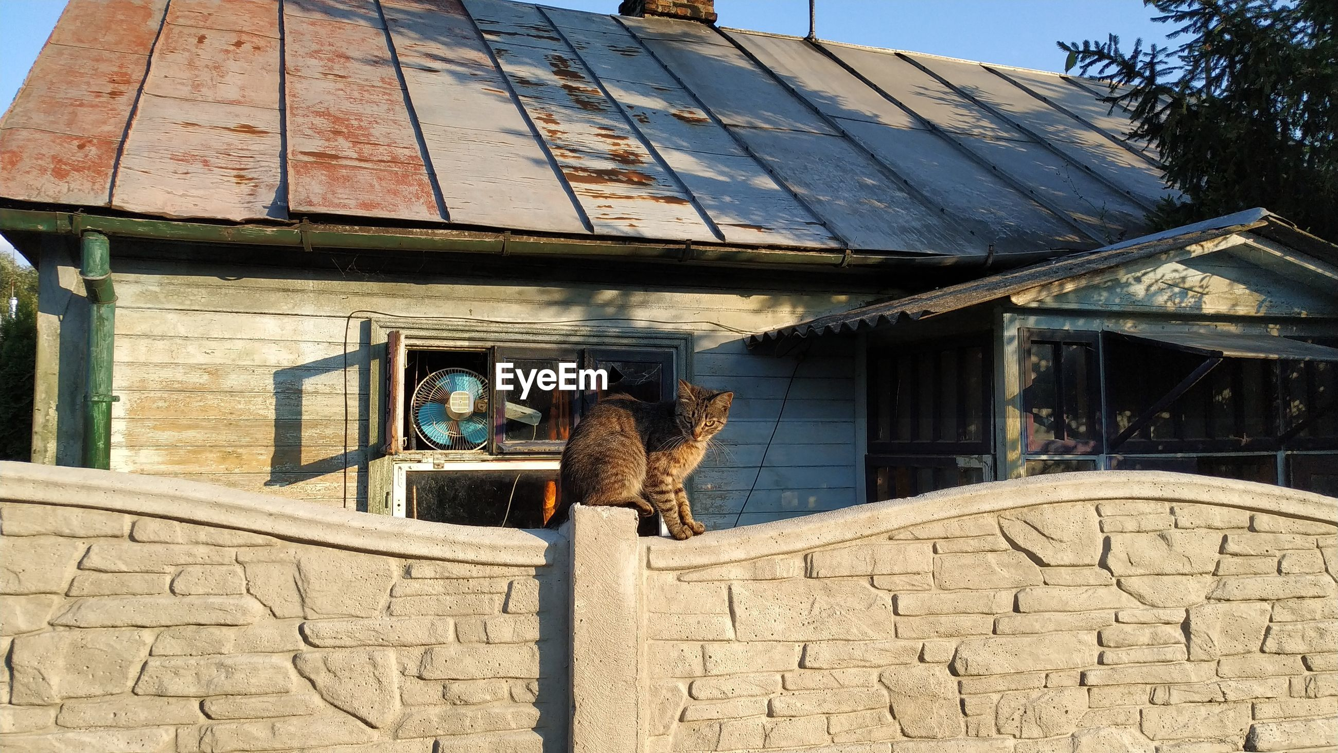 VIEW OF AN ANIMAL ON ROOF