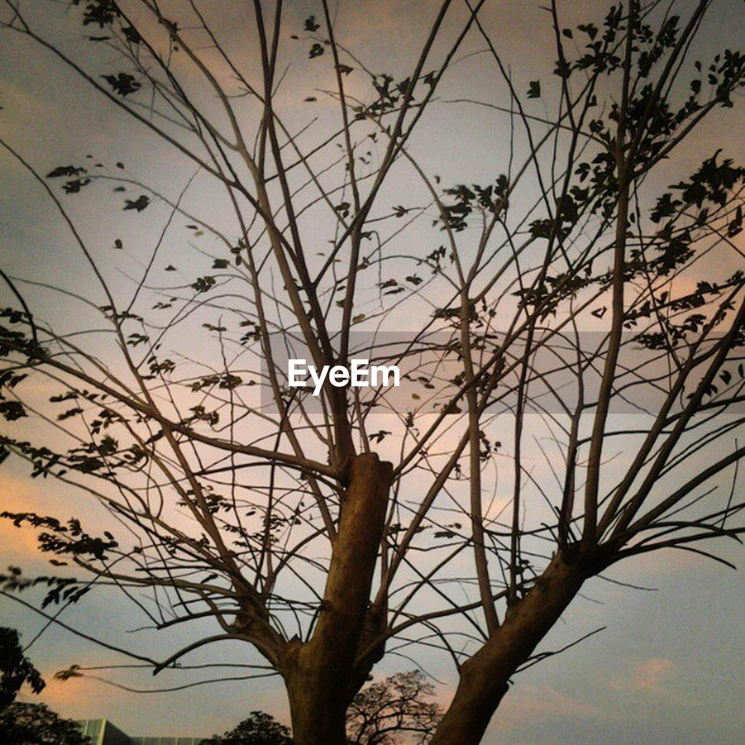 low angle view, branch, silhouette, bare tree, sunset, sky, nature, tranquility, tree, beauty in nature, growth, dusk, outdoors, scenics, no people, plant, tranquil scene, twig, clear sky, close-up