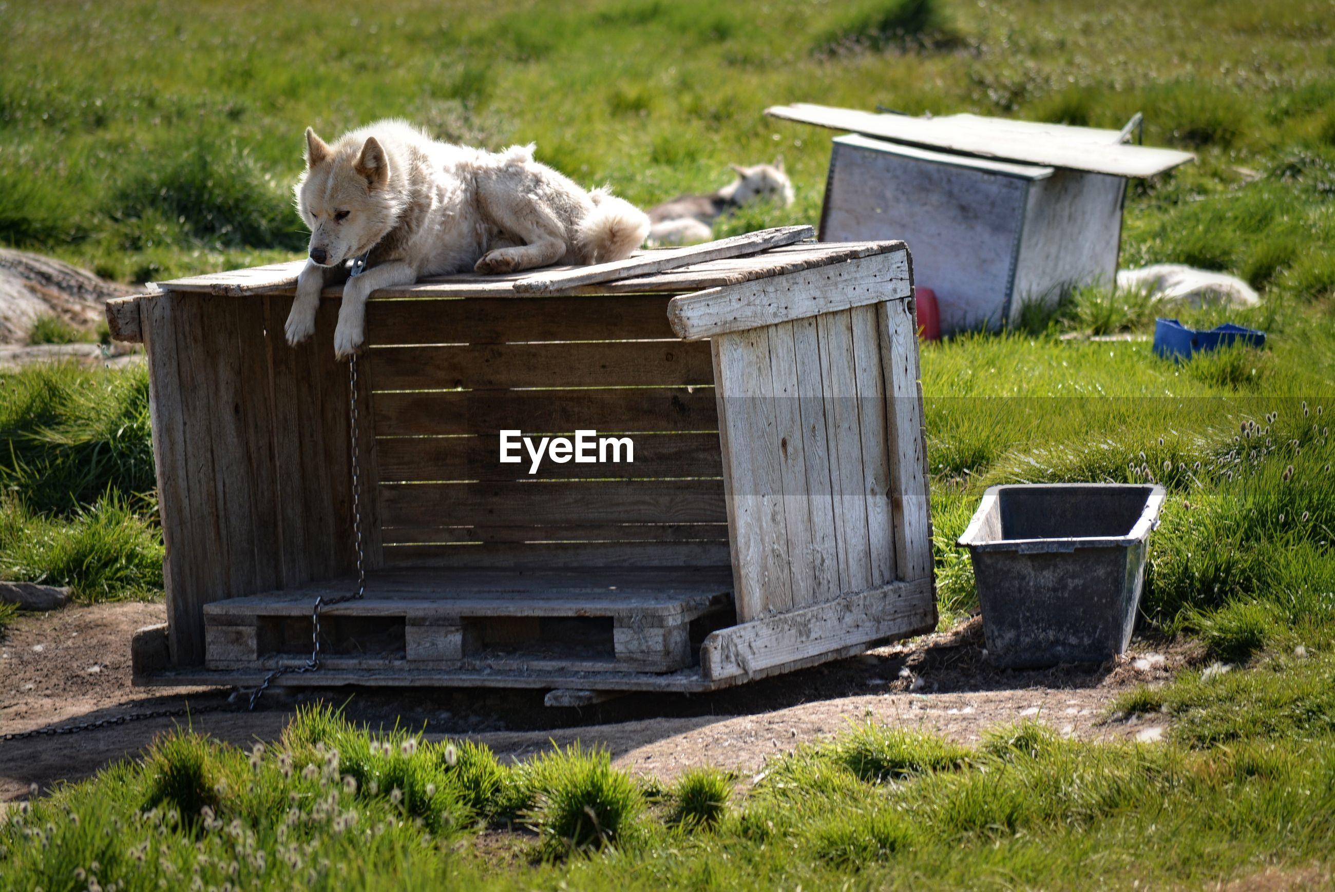 DOG LYING DOWN ON WOOD