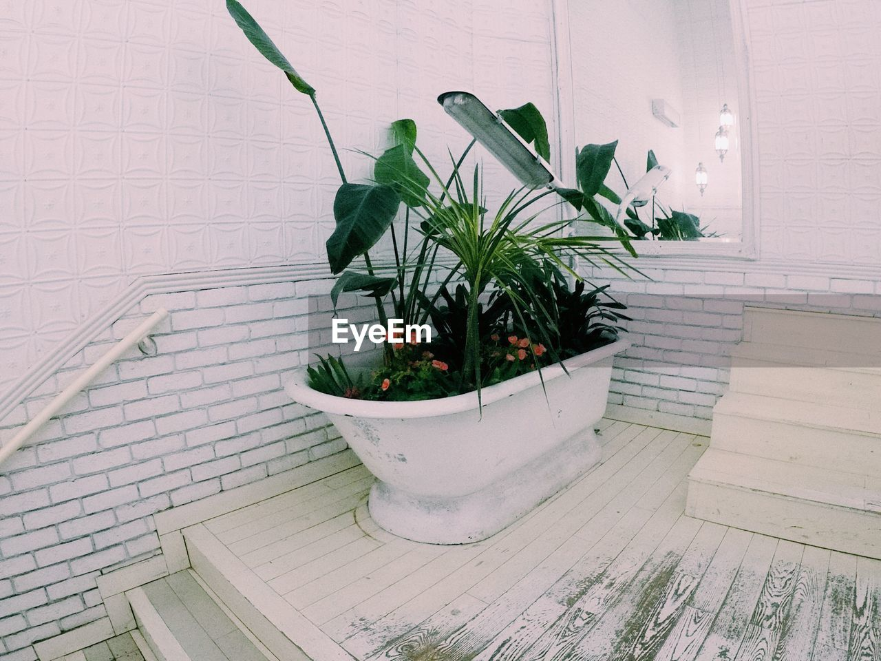 plant, growth, potted plant, nature, green color, architecture, no people, plant part, leaf, wall - building feature, indoors, built structure, day, beauty in nature, flooring, flower pot, white color, high angle view, wood - material, houseplant