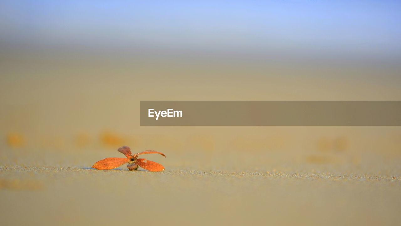 Orange flower on beach