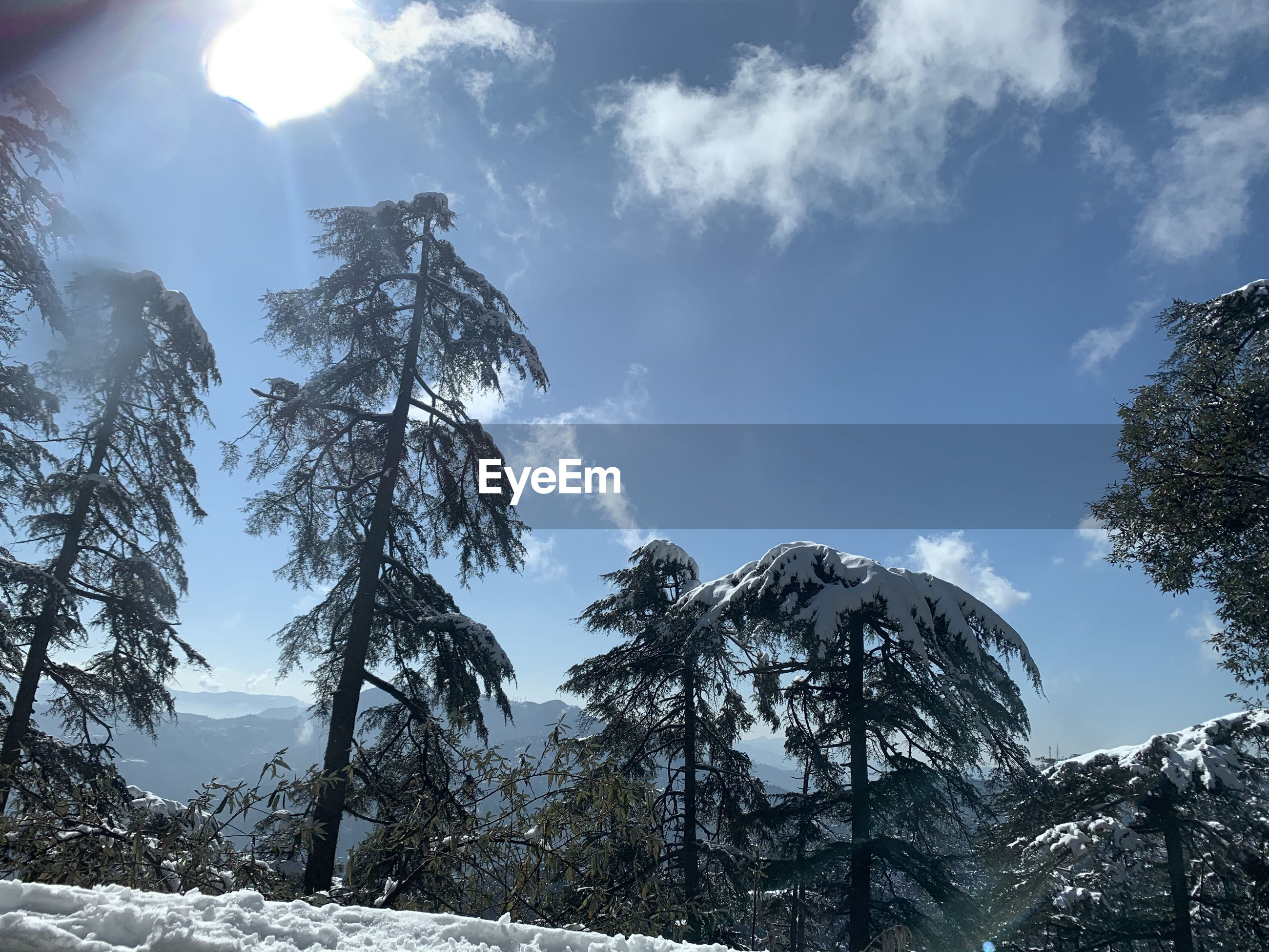 Low angle view of trees and snowcapped mountains against sky