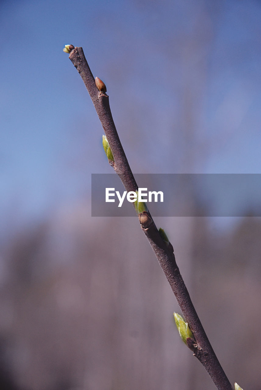 focus on foreground, nature, outdoors, day, growth, no people, close-up, plant, fragility, beauty in nature