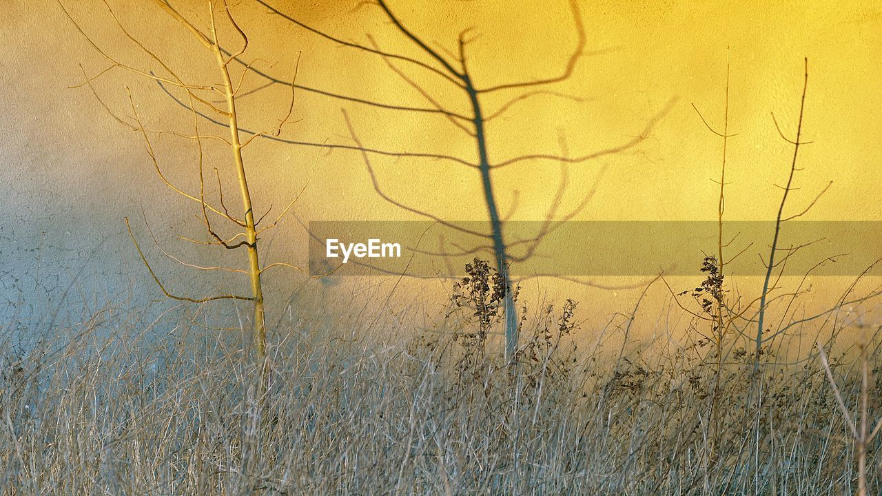 plant, tree, no people, nature, branch, tranquility, beauty in nature, growth, day, bare tree, outdoors, land, close-up, tranquil scene, non-urban scene, dry, scenics - nature, yellow, sky