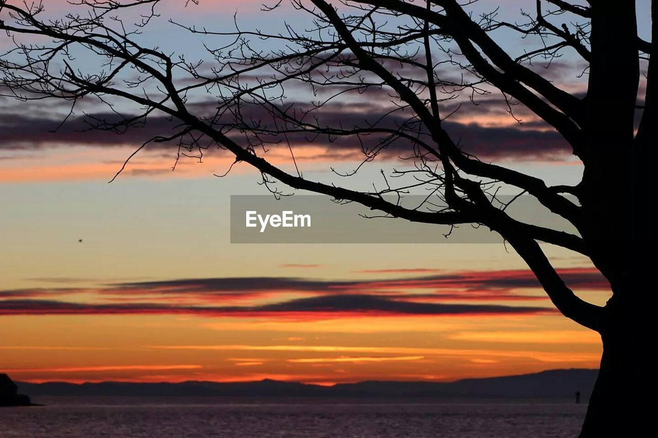 sunset, beauty in nature, silhouette, sky, nature, orange color, tranquility, scenics, tranquil scene, water, cloud - sky, no people, tree, outdoors, sea, bare tree, branch, close-up, day