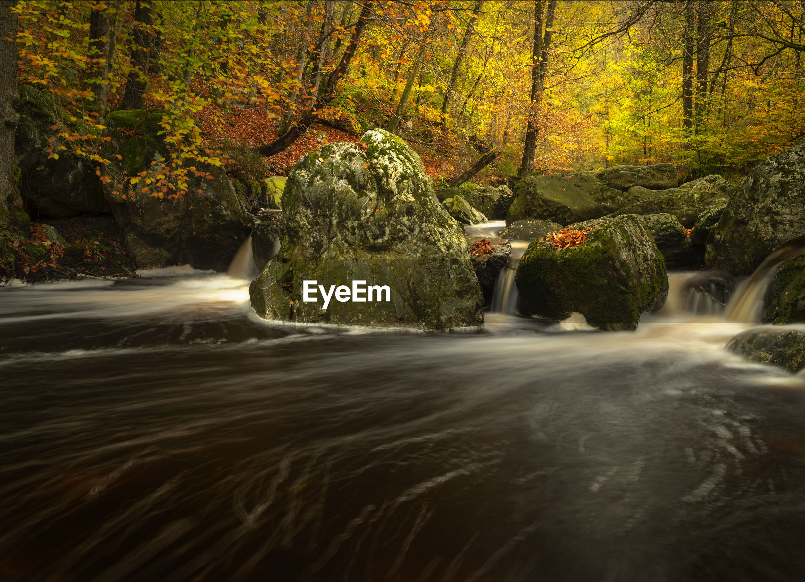 Long exposure image of waterfall in forest during autumn