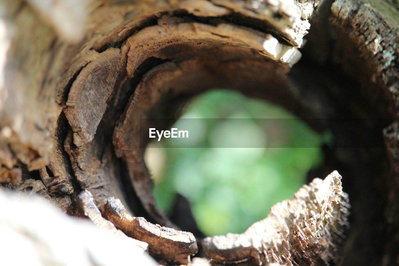 Close-Up Of Hole On Dead Tree Trunk