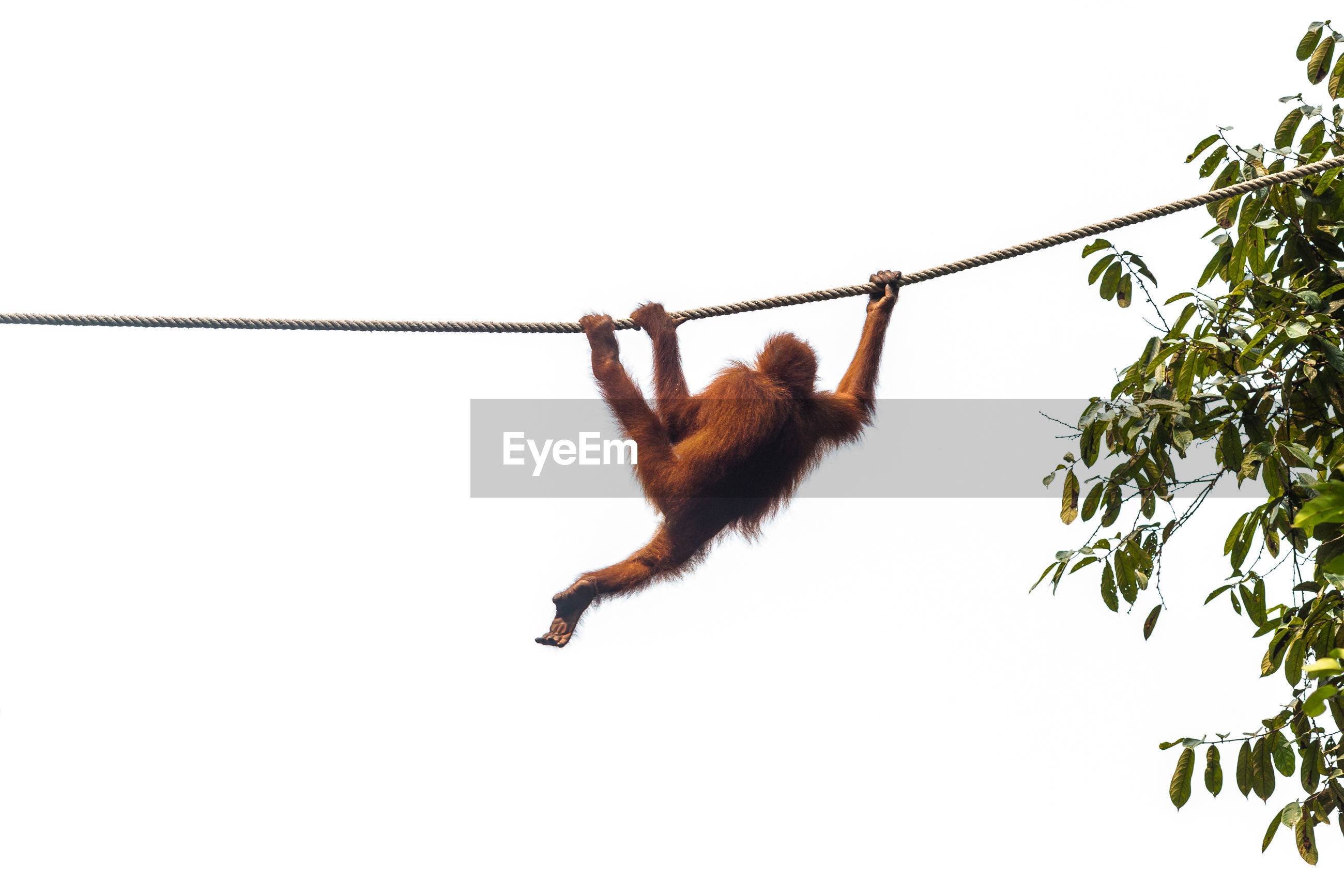 LOW ANGLE VIEW OF MONKEY HANGING ON BRANCH AGAINST SKY