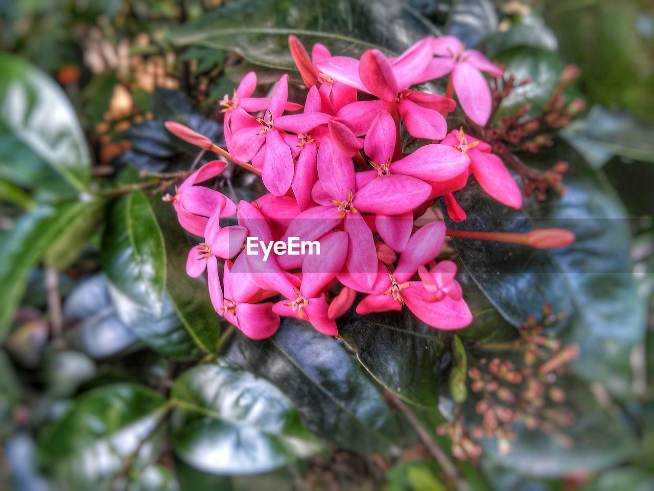 flower, petal, beauty in nature, nature, fragility, freshness, flower head, growth, blooming, outdoors, day, pink color, no people, plant, close-up