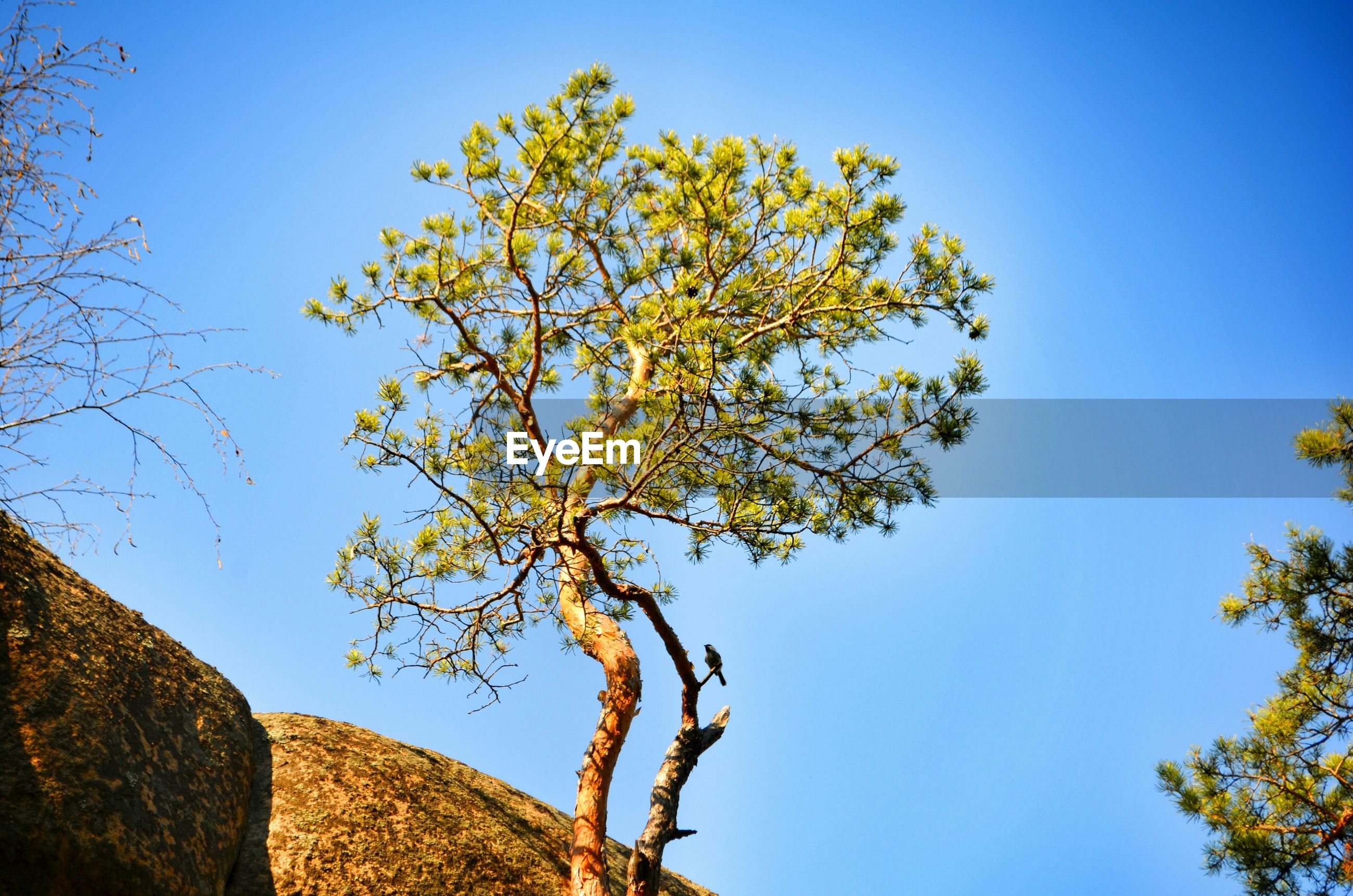 clear sky, blue, low angle view, tree, growth, copy space, branch, nature, sunlight, beauty in nature, day, tranquility, outdoors, no people, built structure, high section, sky, building exterior, architecture, tree trunk