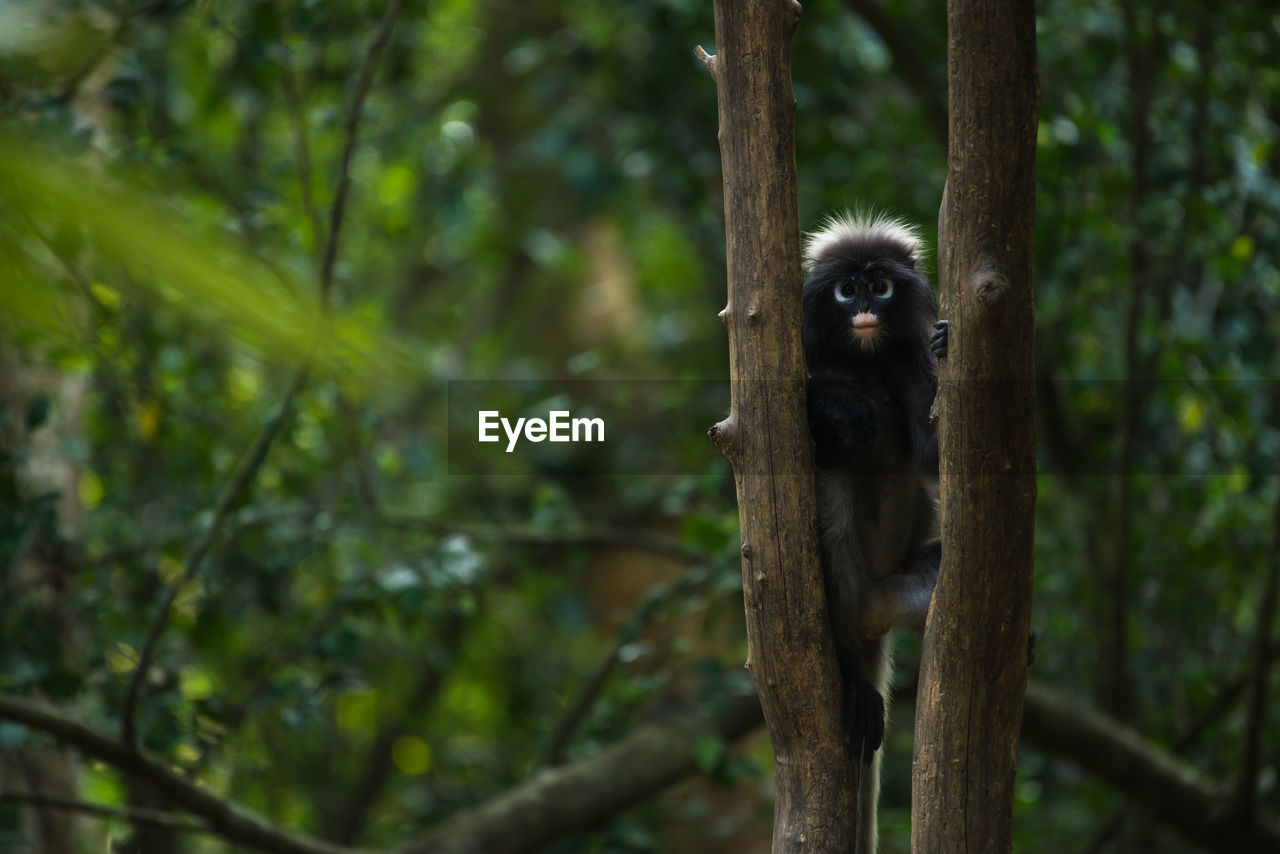 animal themes, one animal, animal, mammal, primate, monkey, animals in the wild, animal wildlife, plant, tree, vertebrate, focus on foreground, day, no people, nature, portrait, looking at camera, sitting, outdoors, branch