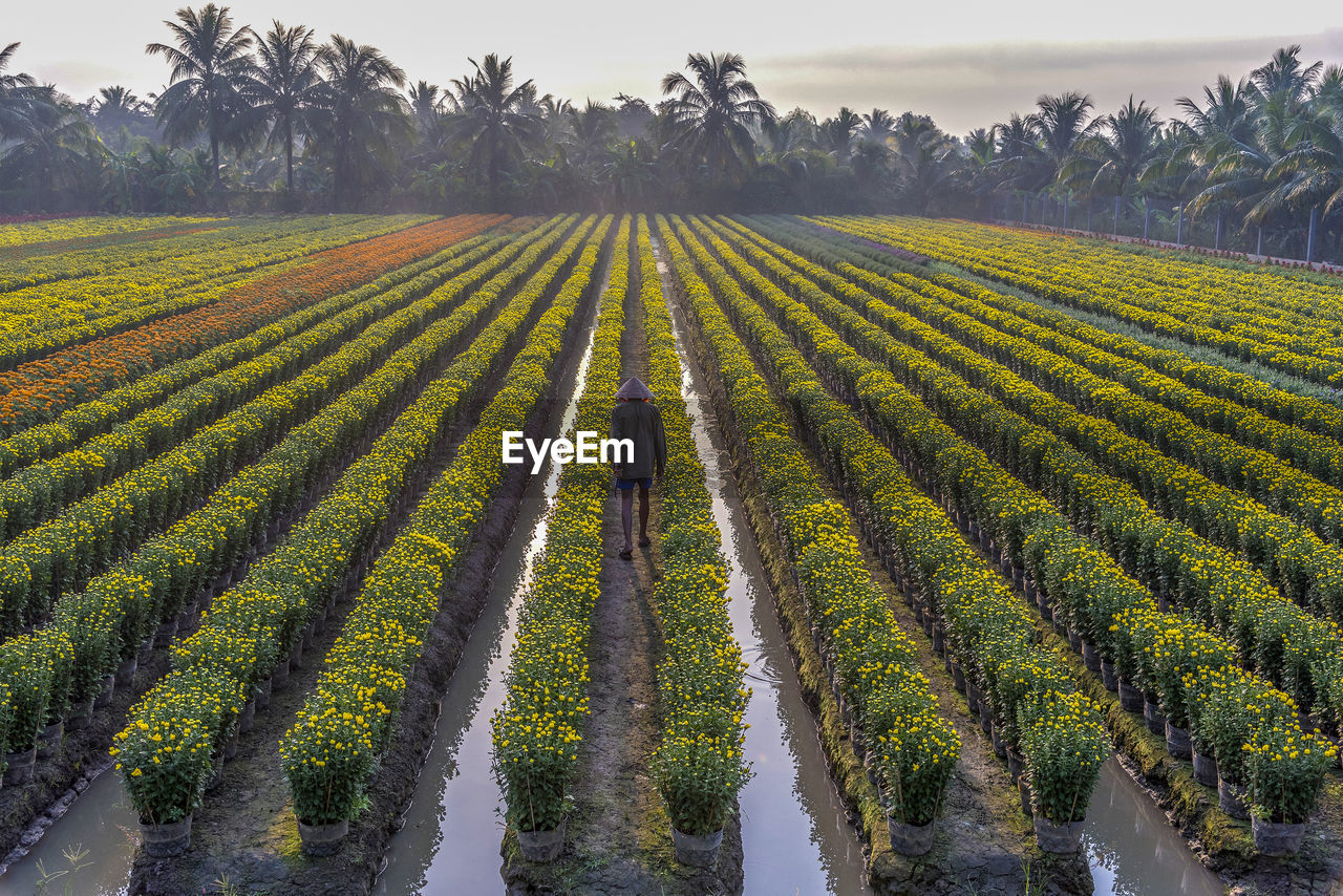 SCENIC VIEW OF FARM FIELD