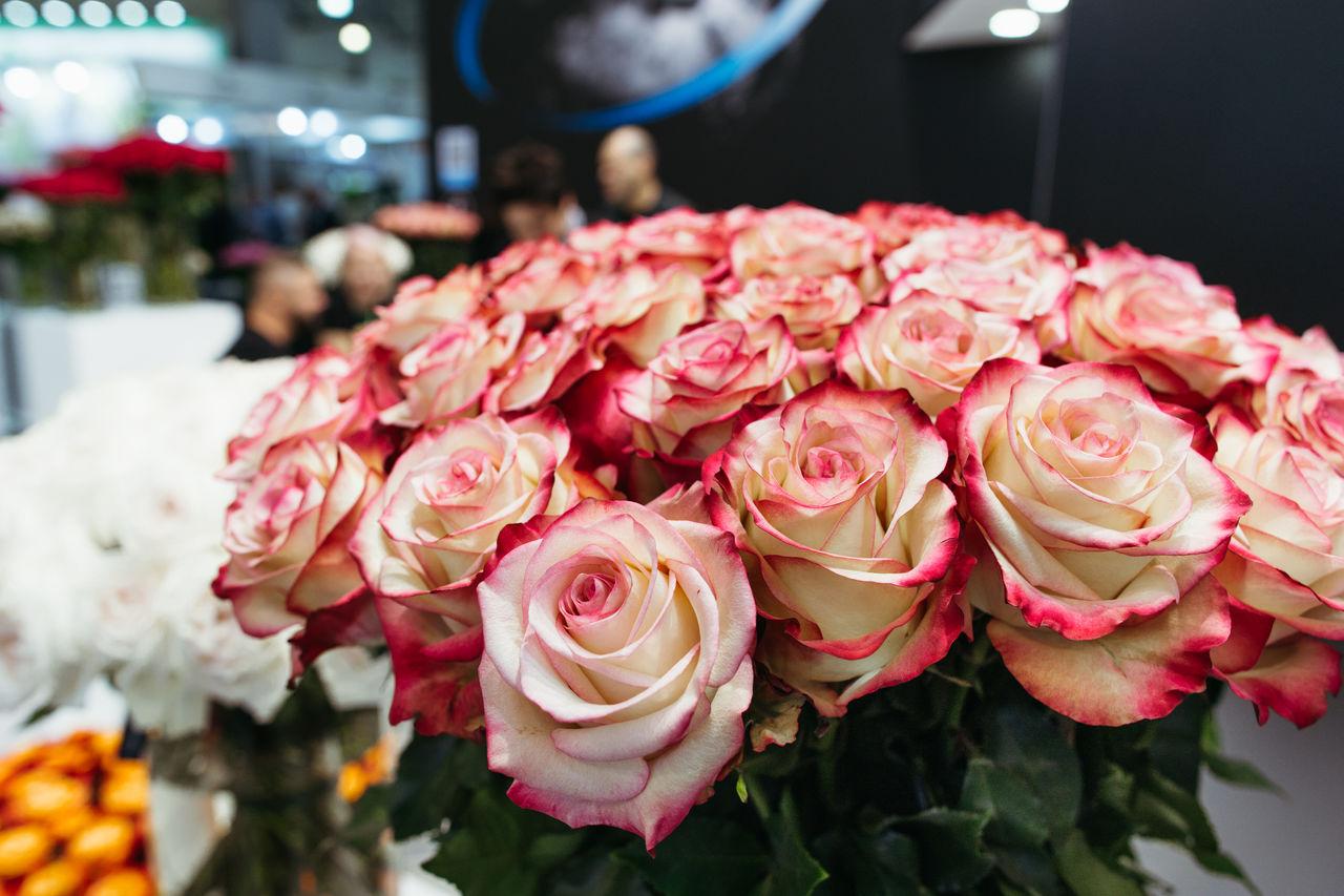 Roses at the flower fair.