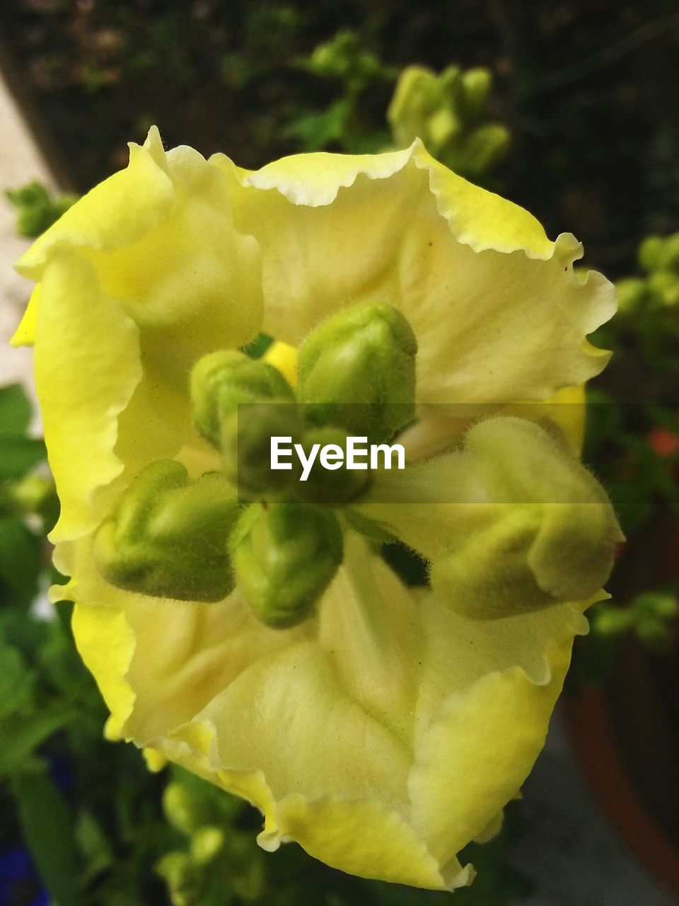 flower, nature, beauty in nature, growth, petal, fragility, freshness, flower head, plant, yellow, blooming, outdoors, close-up, no people, day