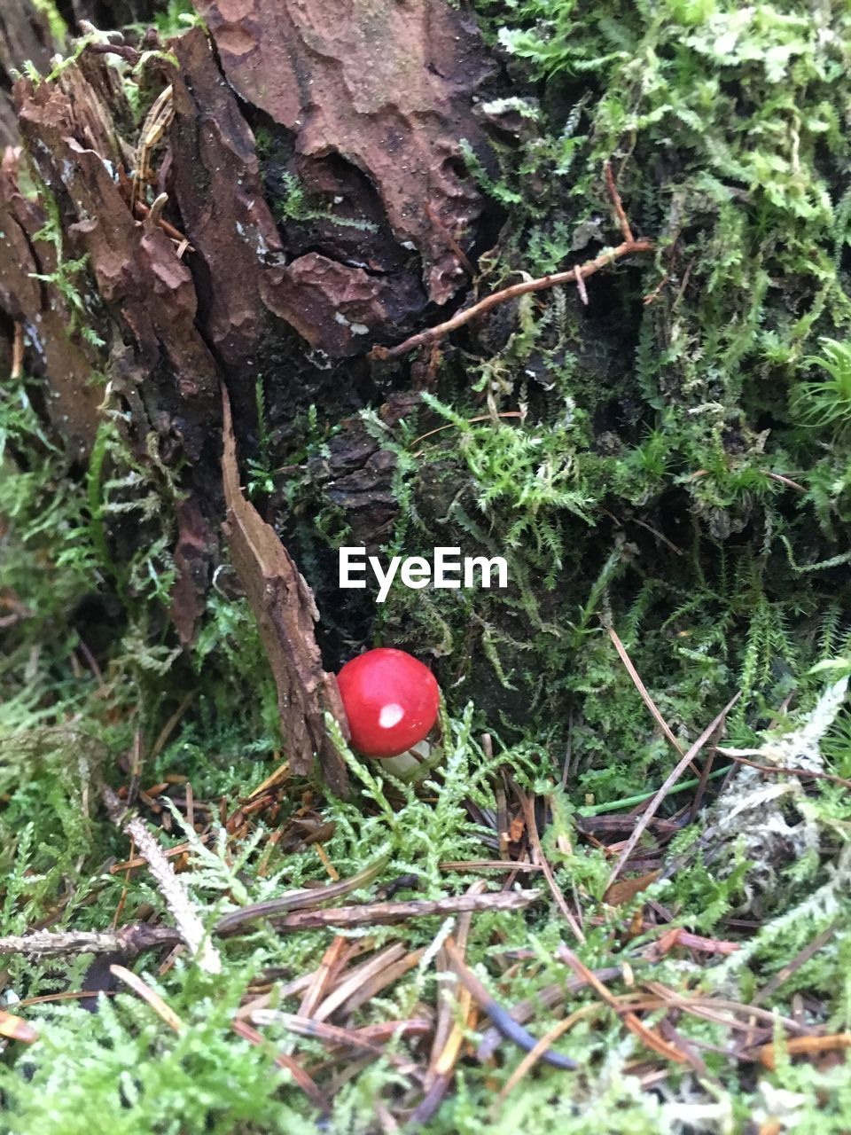 growth, tree, day, no people, red, green color, nature, branch, close-up, fragility, tree trunk, outdoors