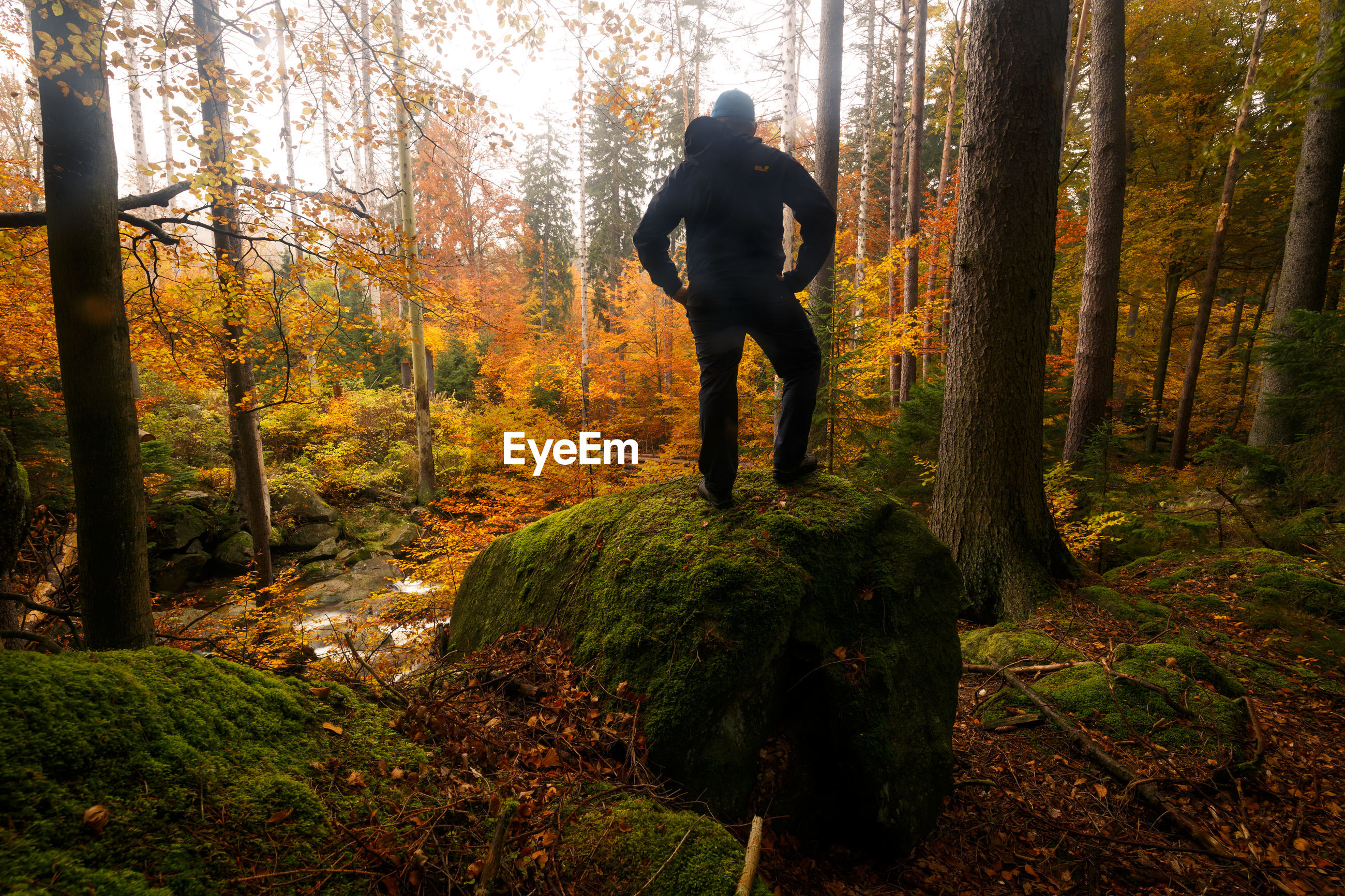 Rear view of man standing on rock amidst trees in forest