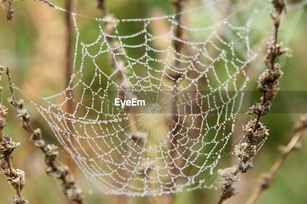 CLOSE-UP OF WATER DROPS ON SPIDER WEB OUTDOORS