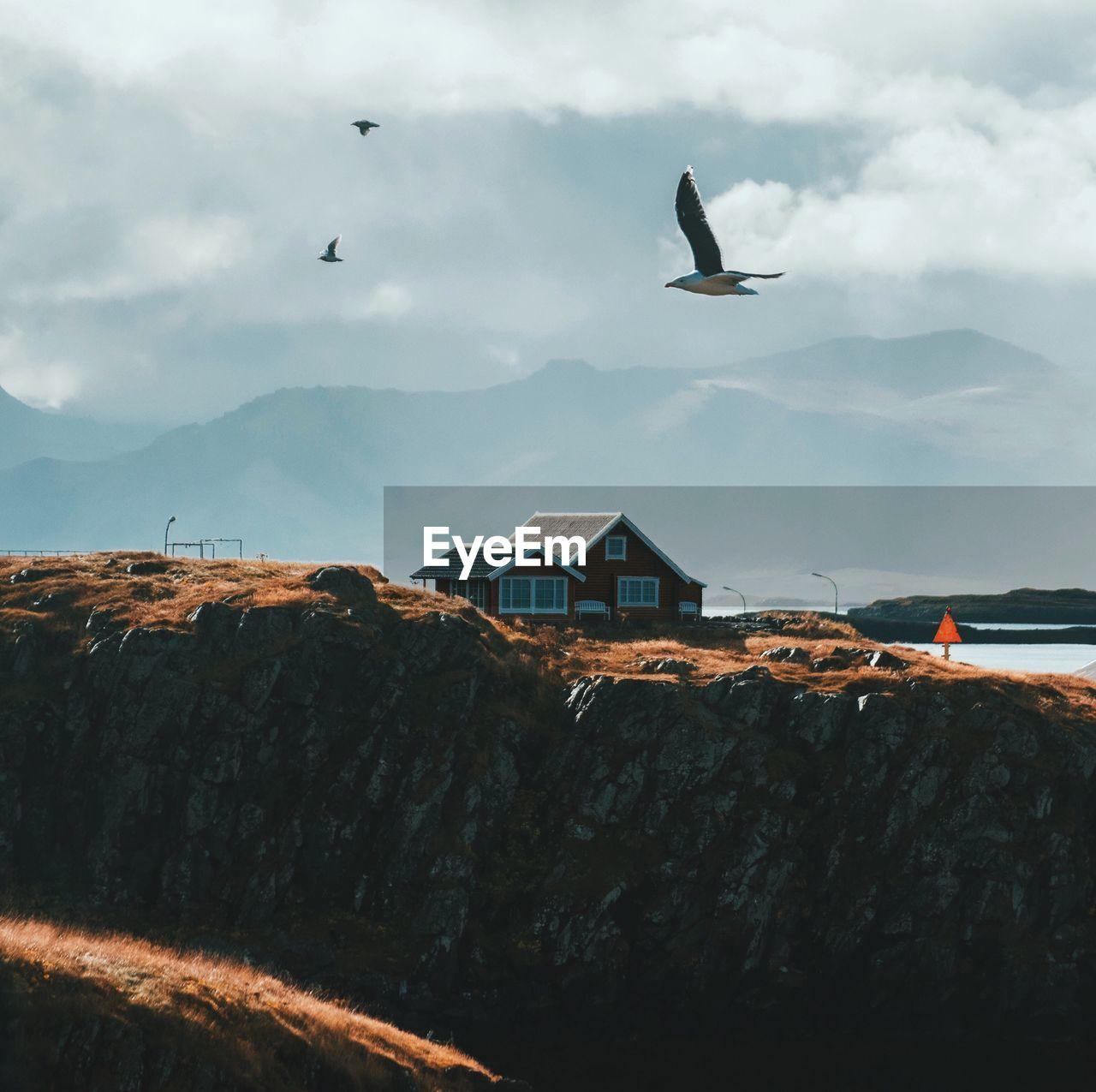 BIRD FLYING OVER BUILT STRUCTURES AGAINST SKY