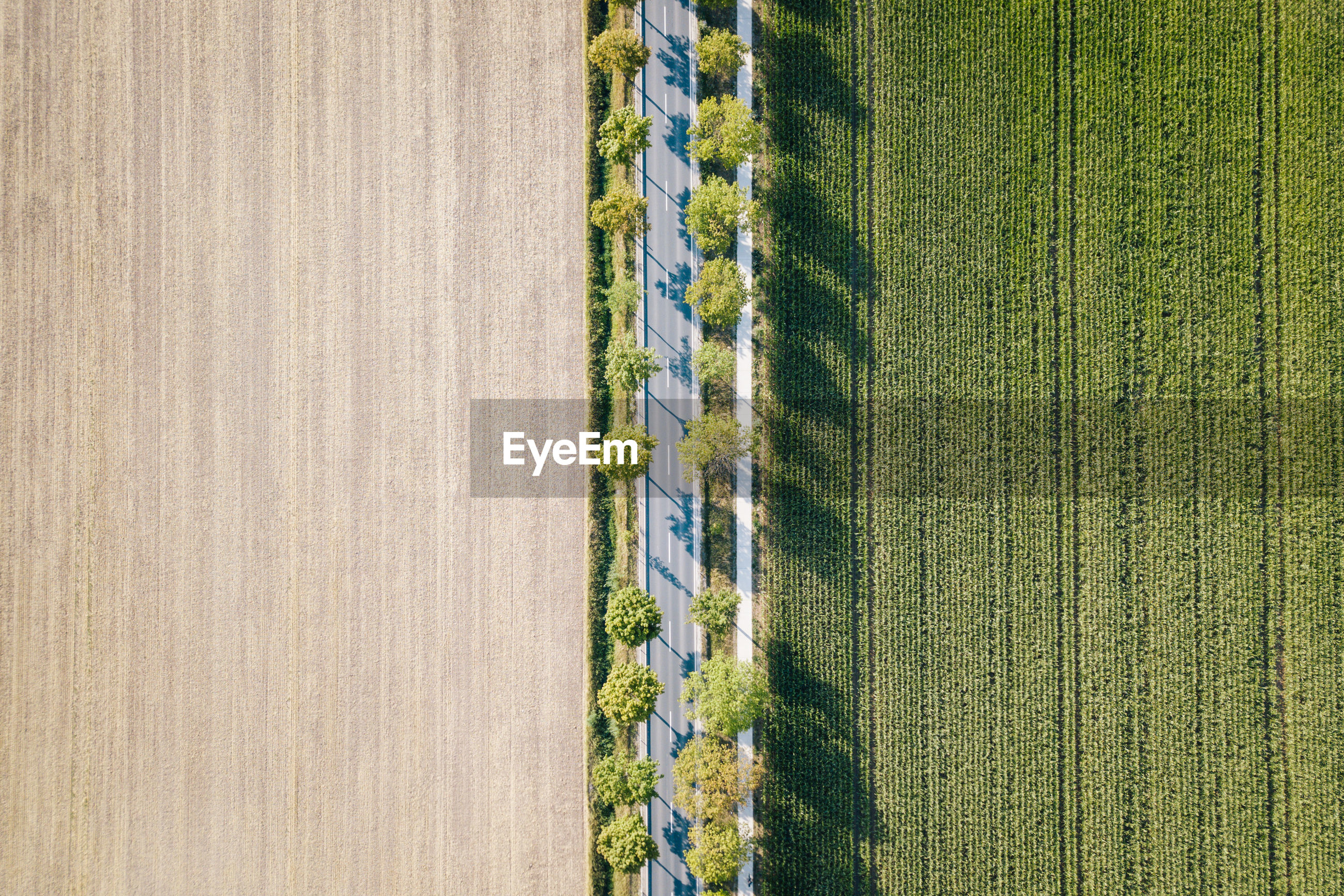 Directly above shot of farms