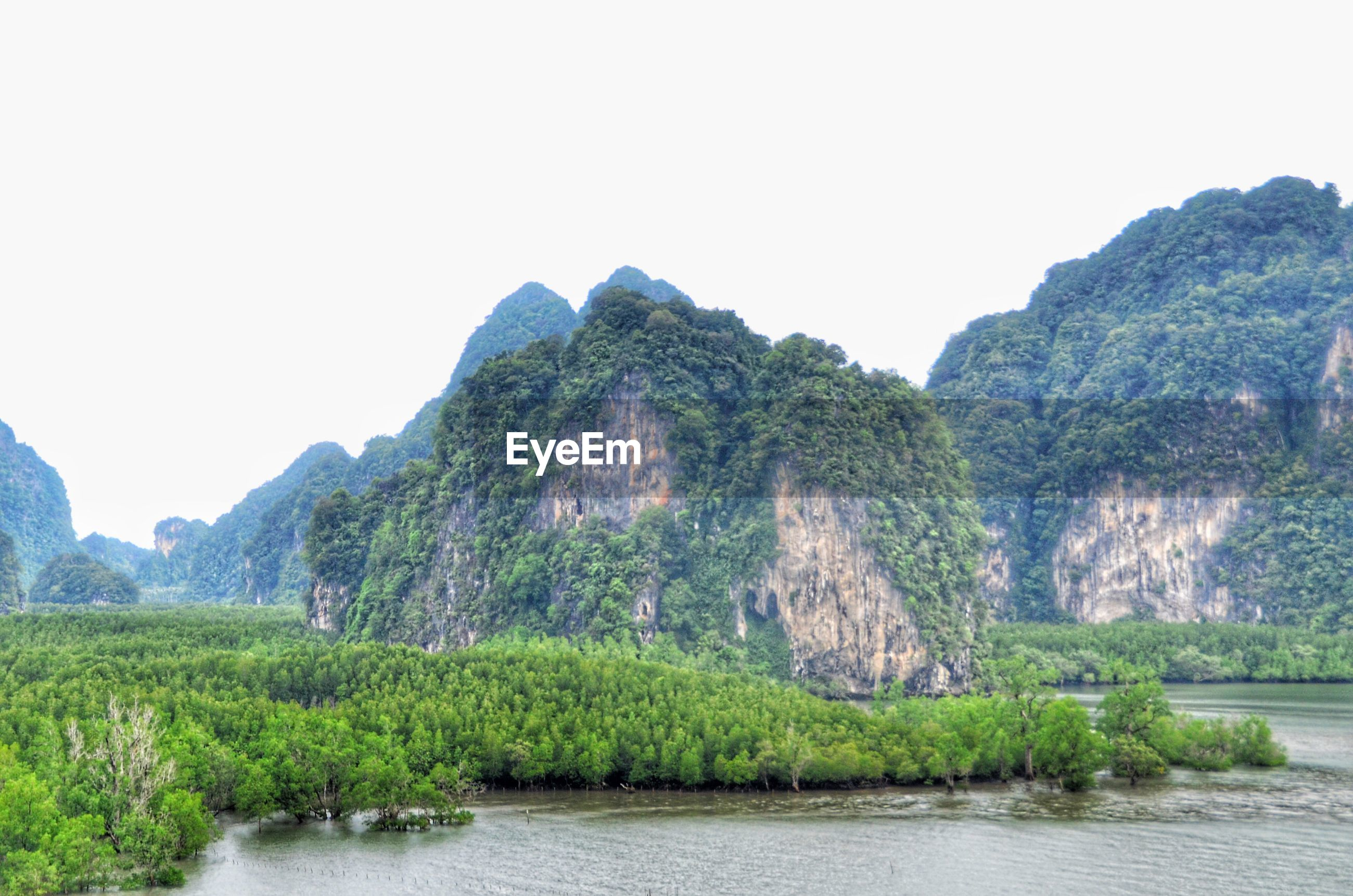PANORAMIC SHOT OF TREES ON LANDSCAPE AGAINST CLEAR SKY