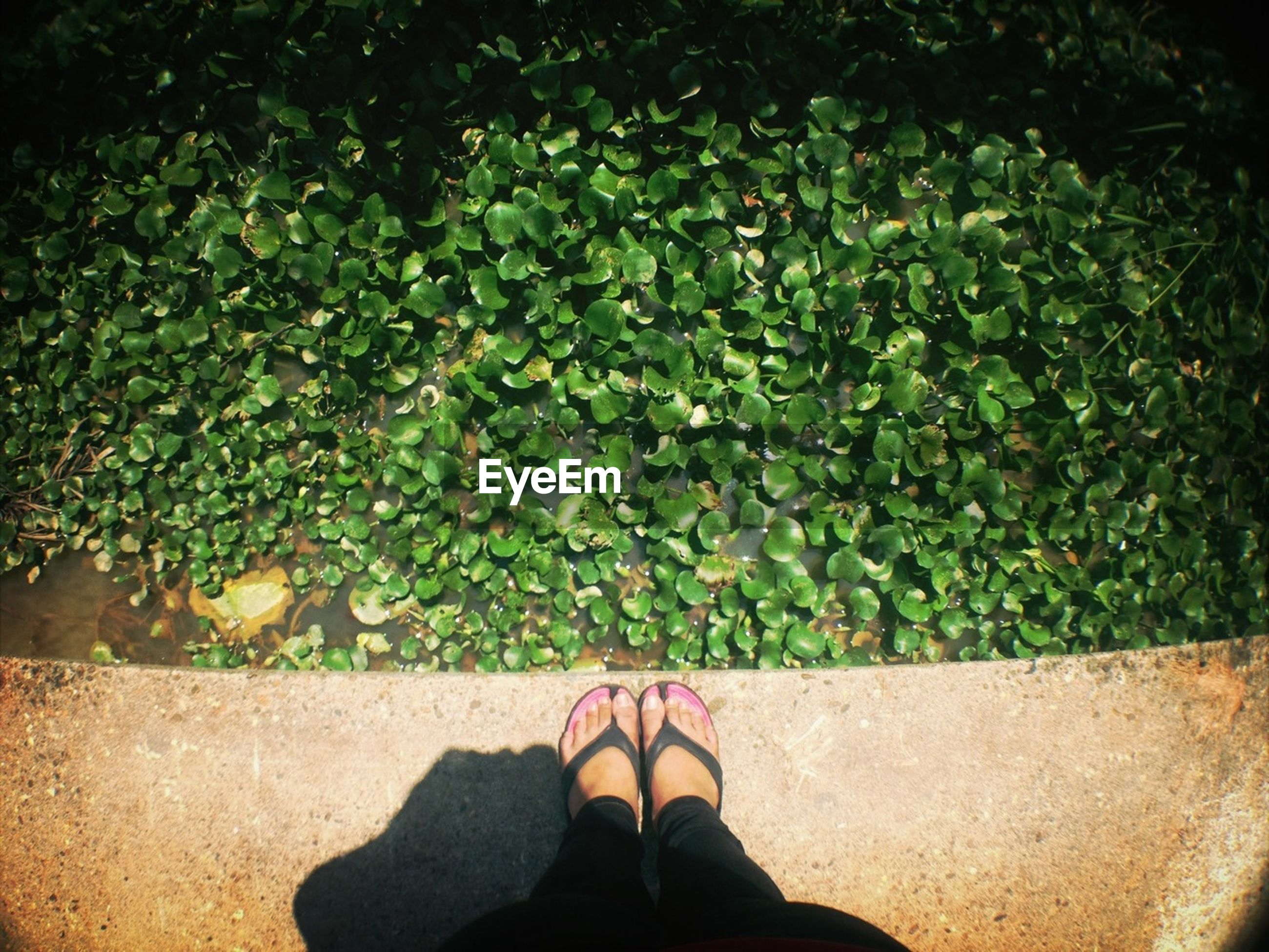 low section, person, personal perspective, shoe, standing, human foot, footwear, high angle view, leaf, lifestyles, unrecognizable person, plant, men, green color, part of, leisure activity, day
