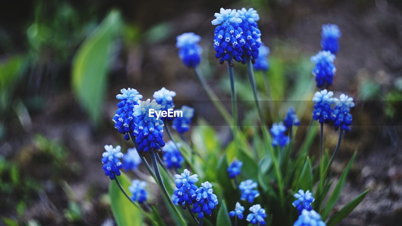 flowering plant, flower, plant, vulnerability, fragility, freshness, beauty in nature, growth, purple, close-up, blue, petal, focus on foreground, nature, flower head, field, inflorescence, no people, day, land, lavender, small