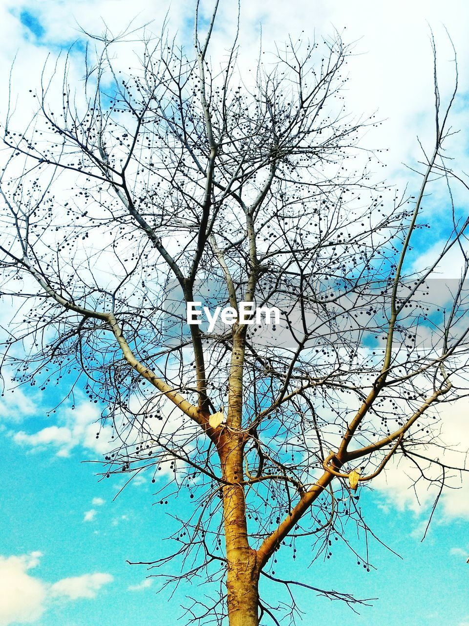 tree, sky, bare tree, low angle view, branch, nature, cloud - sky, day, outdoors, tree trunk, blue, no people, beauty in nature, growth