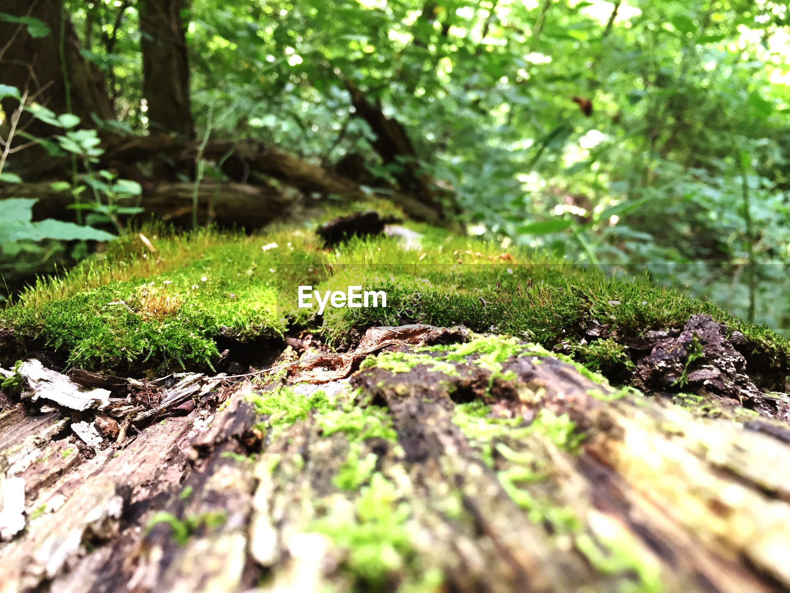 tree, growth, tree trunk, forest, moss, nature, selective focus, green color, plant, tranquility, branch, beauty in nature, close-up, outdoors, no people, rock - object, day, leaf, focus on foreground, growing