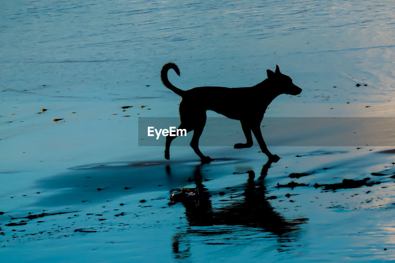 Dog In Water