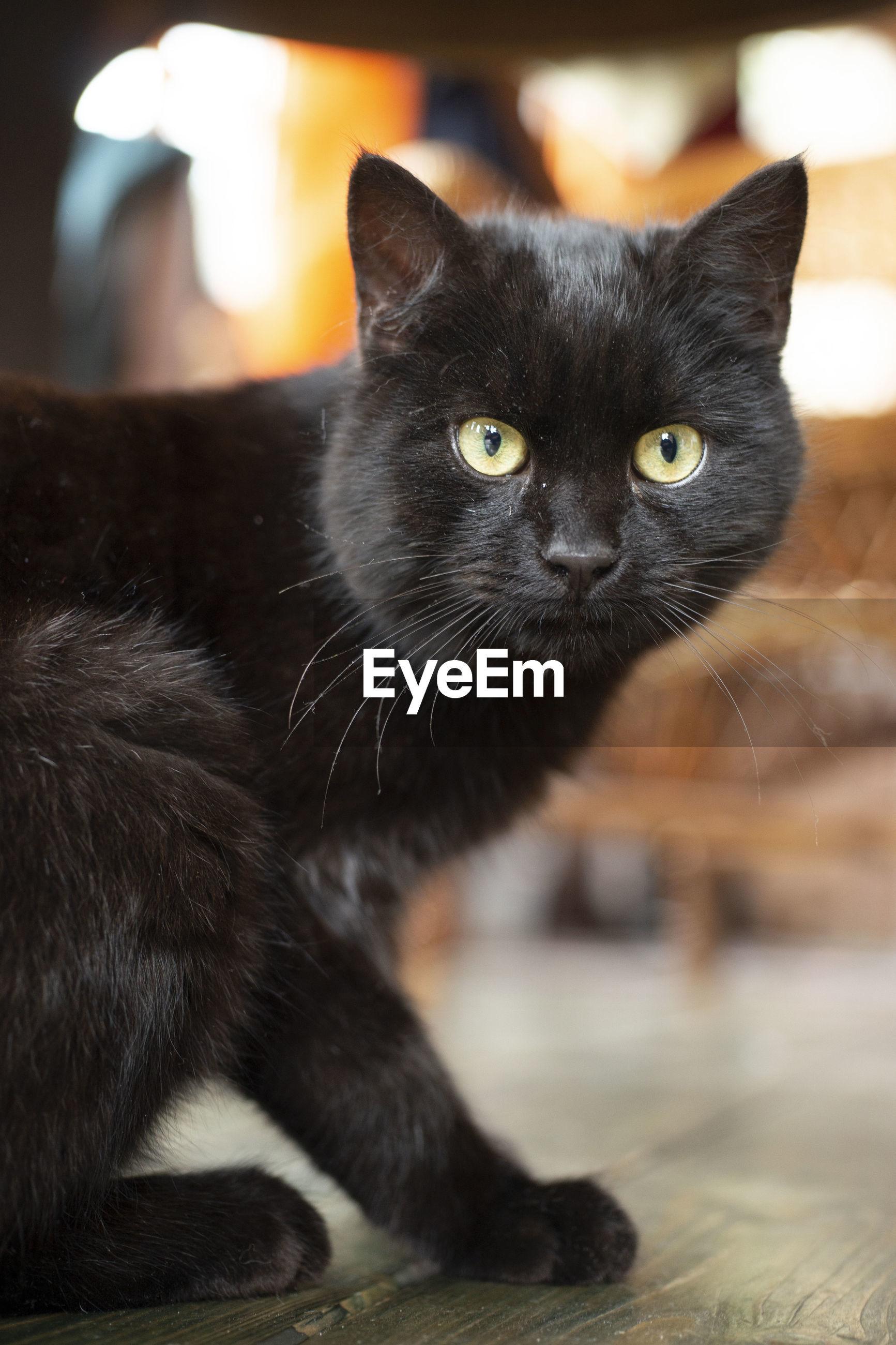 CLOSE-UP PORTRAIT OF A BLACK CAT