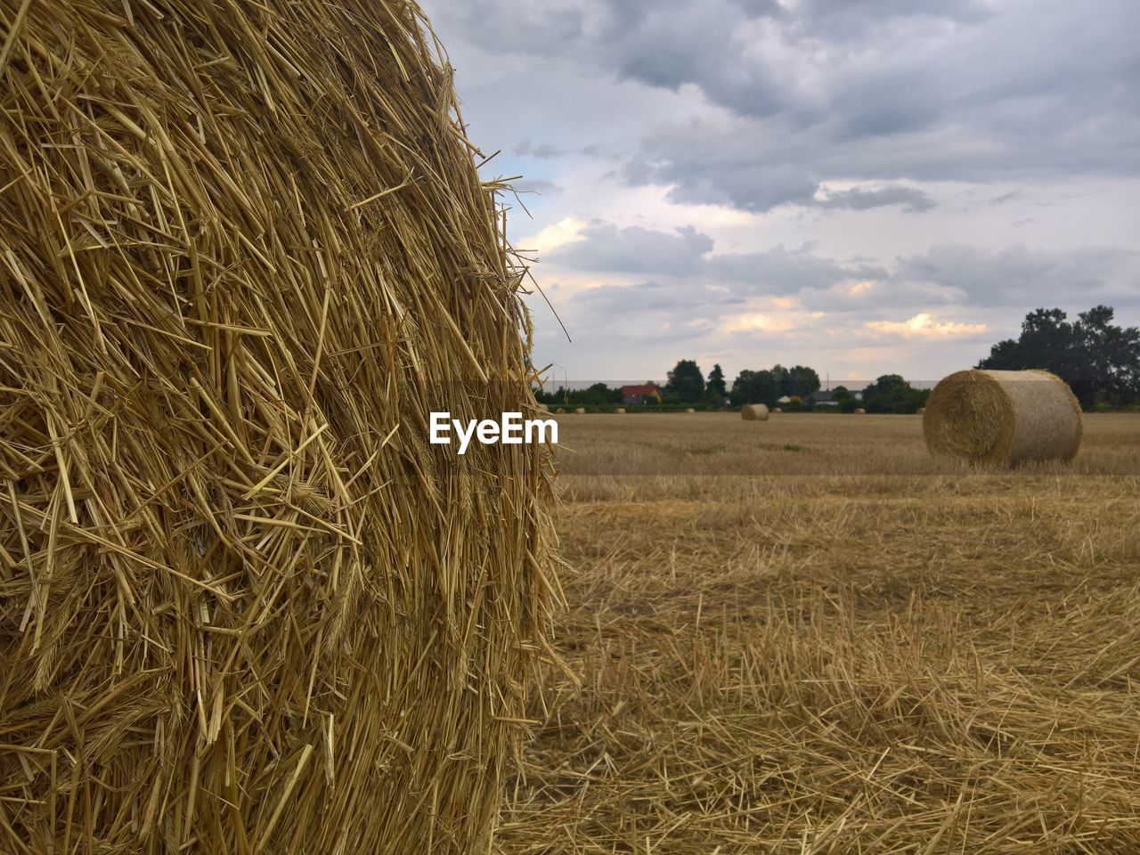 hay, bale, agriculture, farm, field, sky, plant, landscape, rural scene, land, cloud - sky, nature, rolled up, environment, tranquility, harvesting, beauty in nature, tranquil scene, crop, no people