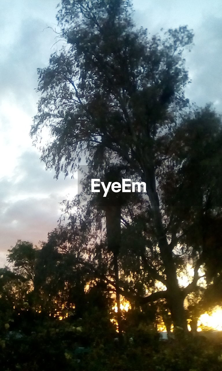 tree, nature, low angle view, sky, no people, growth, beauty in nature, tranquility, outdoors, scenics, day, forest, branch, close-up