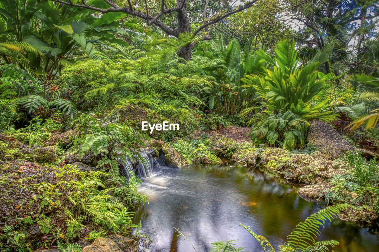 plant, tree, water, forest, scenics - nature, beauty in nature, green color, nature, growth, motion, land, foliage, tranquility, waterfall, lush foliage, flowing water, no people, tranquil scene, day, outdoors, rainforest, flowing