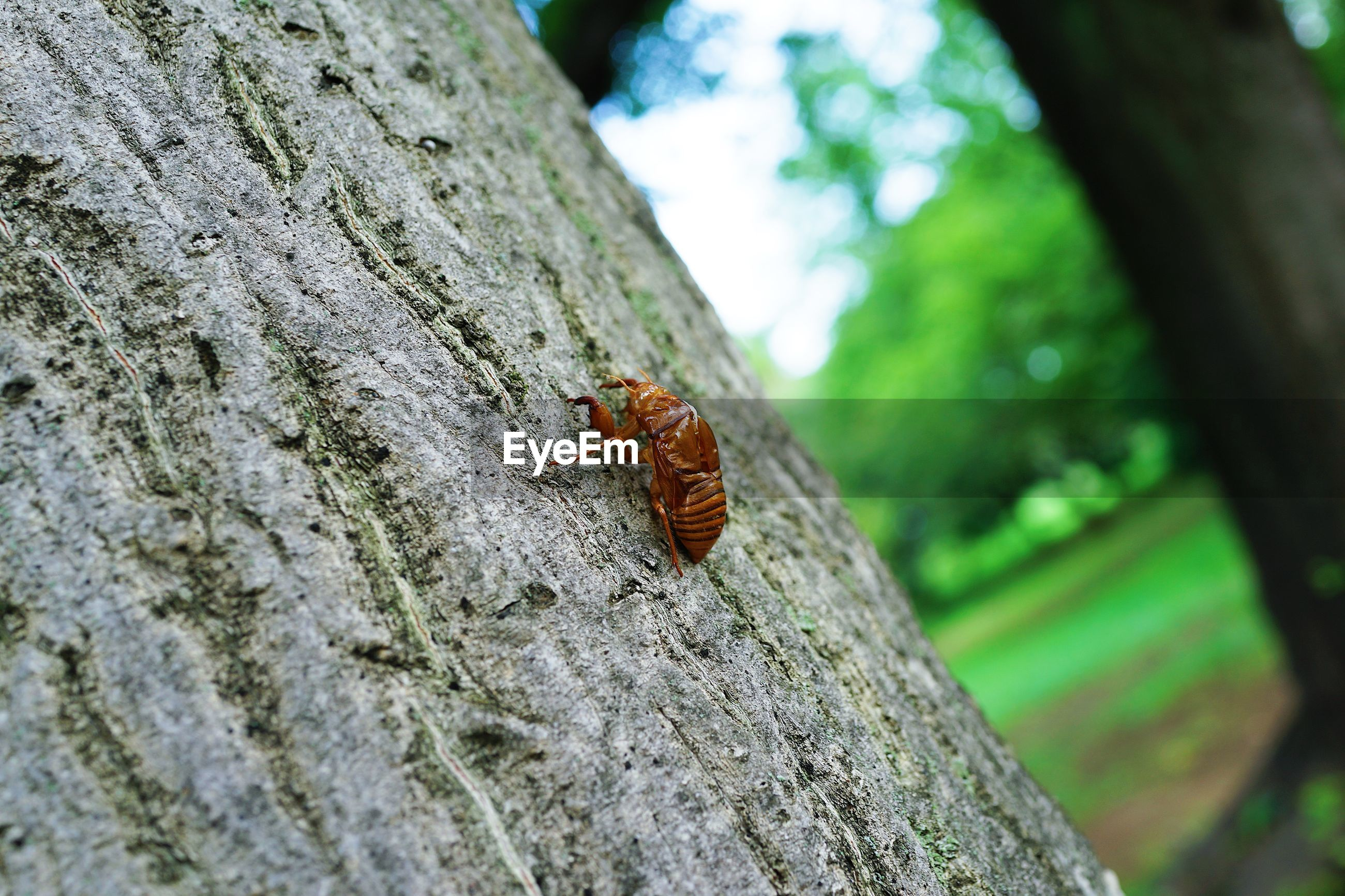 CLOSE-UP OF INSECT ON TREE