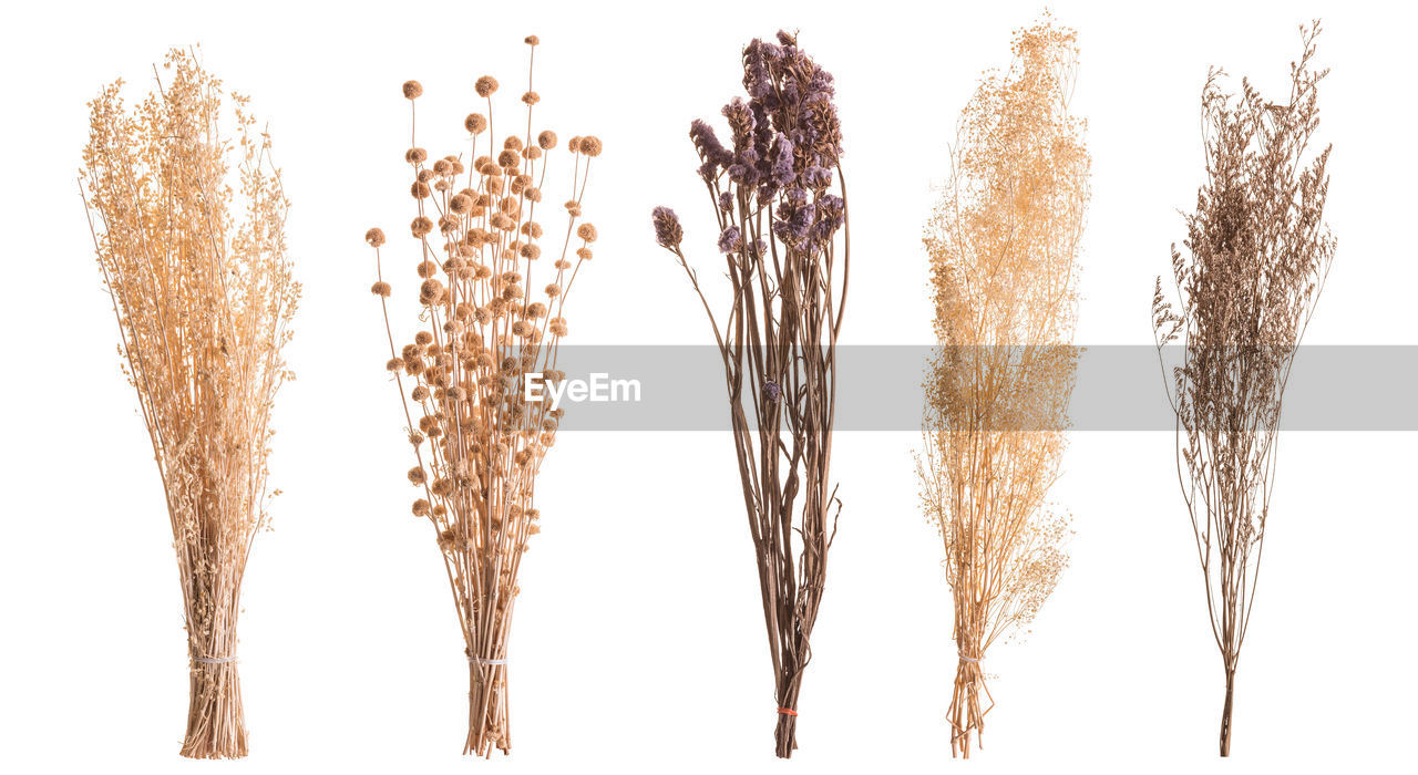Close-up of dry plants over white background