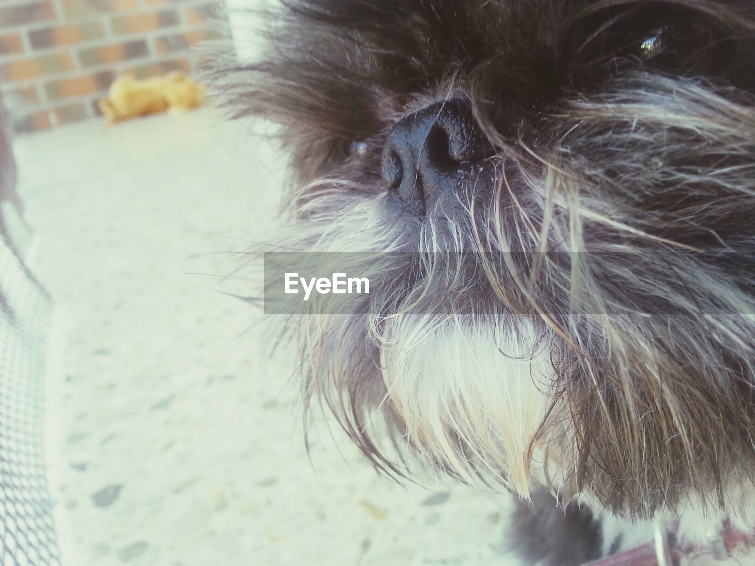 one animal, animal themes, domestic animals, pets, indoors, mammal, close-up, animal hair, domestic cat, animal head, focus on foreground, animal body part, dog, selective focus, part of, cat, whisker, one person, feline, high angle view