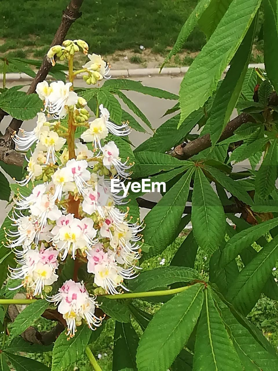 flowering plant, plant, flower, leaf, plant part, growth, beauty in nature, fragility, vulnerability, freshness, close-up, petal, green color, nature, day, no people, flower head, botany, inflorescence, white color, outdoors, springtime, pollen