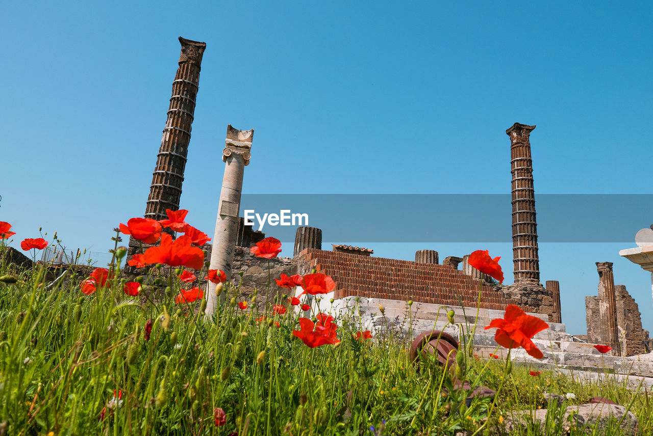 plant, built structure, architecture, building exterior, flowering plant, nature, flower, sky, growth, clear sky, no people, day, field, building, smoke stack, sunlight, factory, history, red, industry, outdoors, pollution