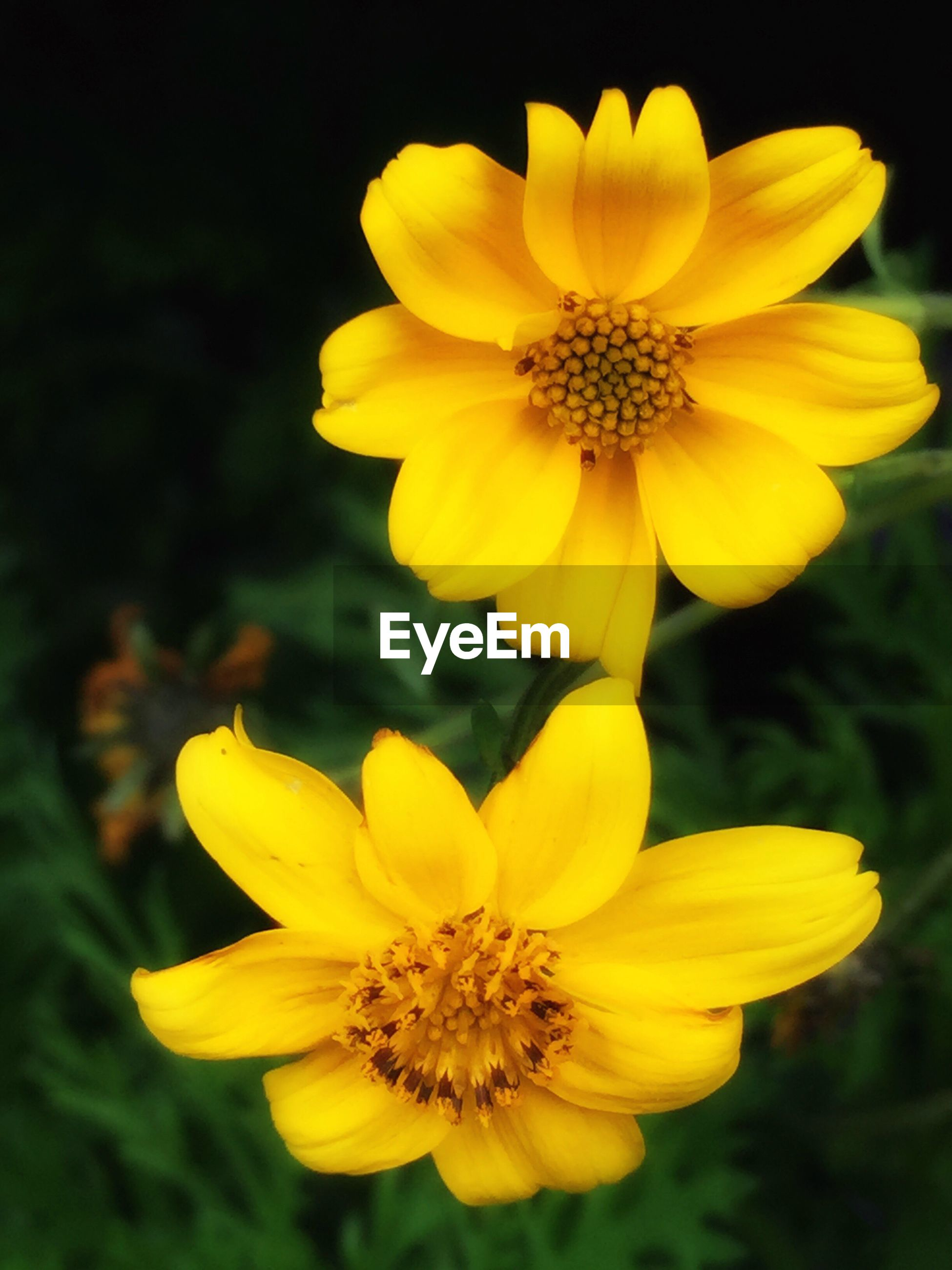 flower, yellow, petal, freshness, fragility, flower head, growth, beauty in nature, close-up, blooming, focus on foreground, nature, plant, pollen, in bloom, park - man made space, vibrant color, outdoors, no people, blossom