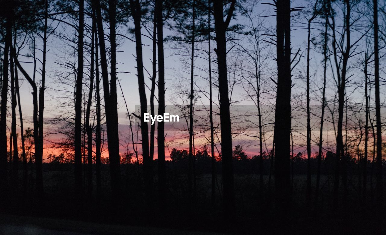 tree, sunset, nature, tranquil scene, silhouette, forest, no people, sky, tranquility, scenics, forest fire, beauty in nature, tree trunk, landscape, outdoors, growth, day