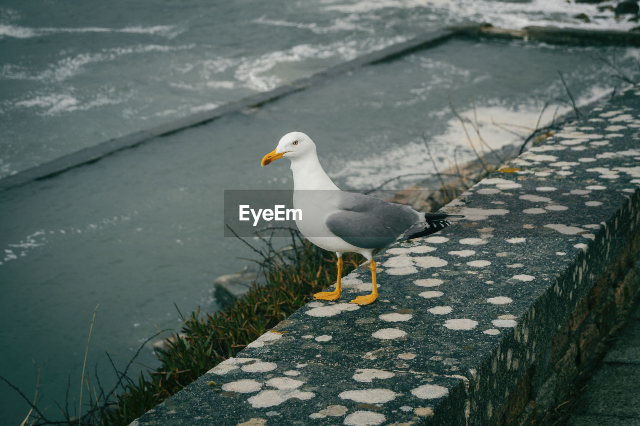 animal, animal themes, bird, animal wildlife, animals in the wild, water, vertebrate, one animal, seagull, nature, day, perching, white color, no people, high angle view, outdoors, focus on foreground, lake, footpath