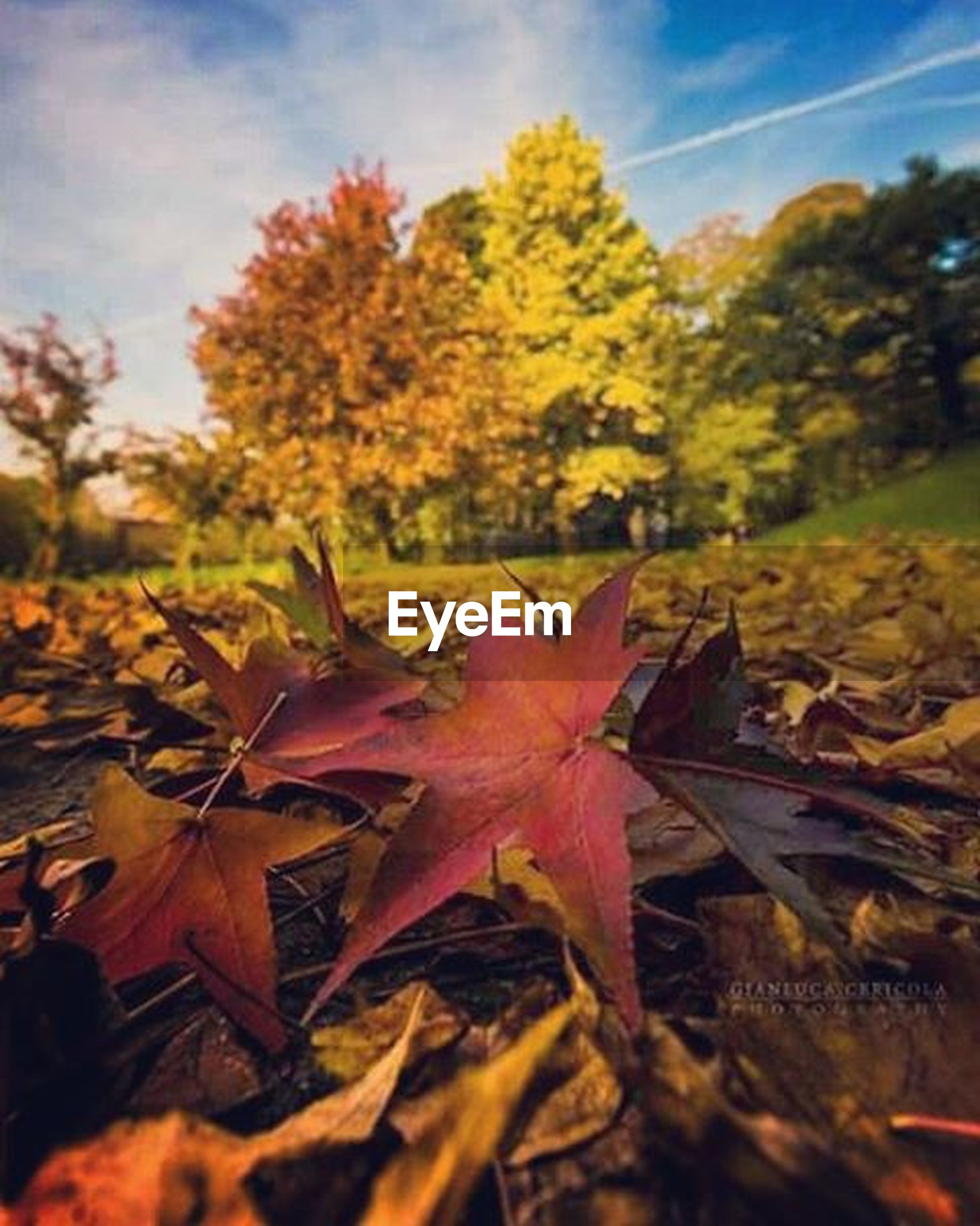 autumn, change, leaf, season, close-up, fragility, nature, dry, beauty in nature, maple leaf, leaves, focus on foreground, selective focus, growth, flower, sky, yellow, field, sunlight, tranquility