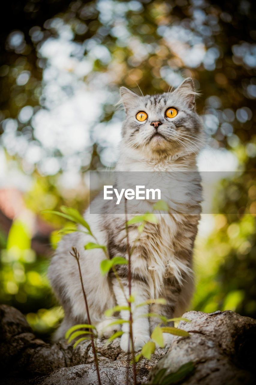 animal themes, animal, one animal, mammal, feline, vertebrate, cat, no people, domestic cat, portrait, looking at camera, pets, domestic, domestic animals, tree, day, focus on foreground, nature, selective focus, sitting, whisker, yellow eyes