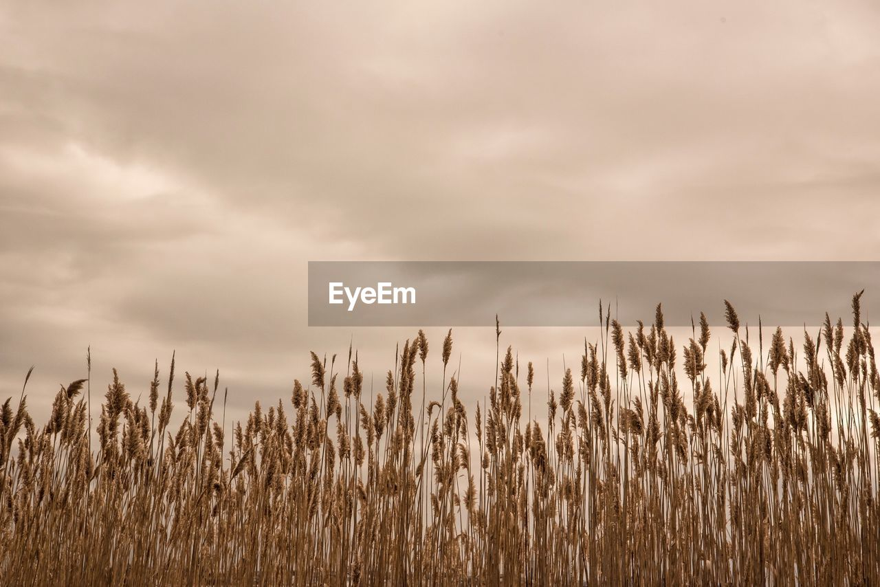 Crops On Field Against Cloudy Sky